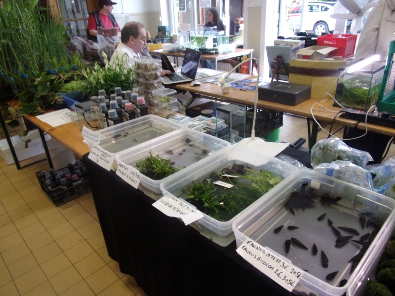 1er bourse aux plantes aquatiques le 19 juin 100_0027