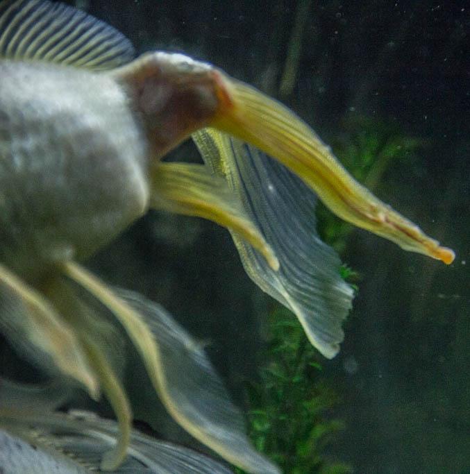 """""""Points blancs"""" sur un poisson rouge Img_9510"""
