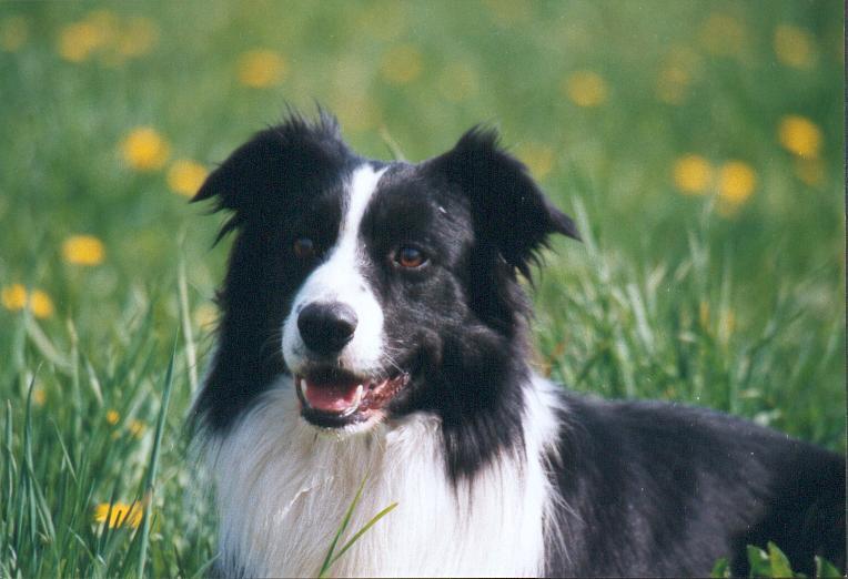 Quelqu'un a-t-il des chiens issus du Mont Kerchouan? Happy_11
