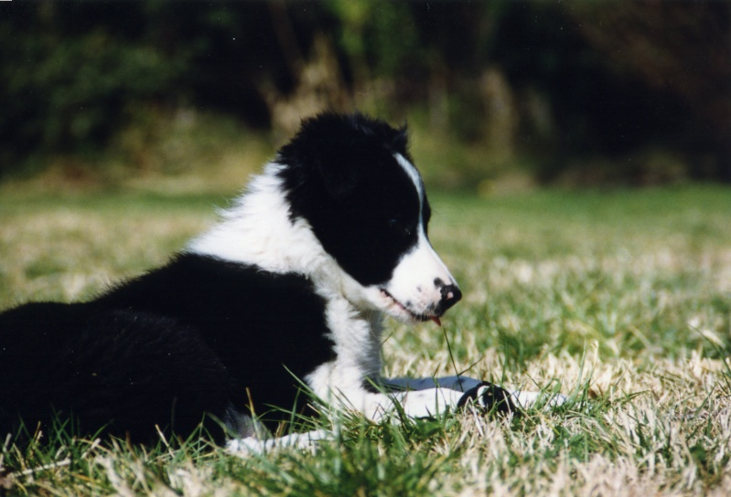 Quelqu'un a-t-il des chiens issus du Mont Kerchouan? - Page 2 Happy_12