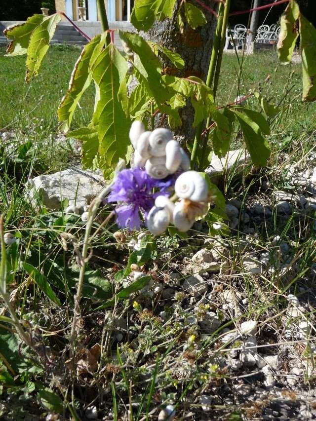 Les escargots blancs qui grimpent!!! P1090411