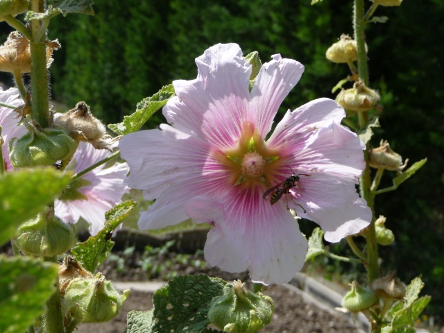 Les petites bestioles de nos jardins! - Page 2 P1090727