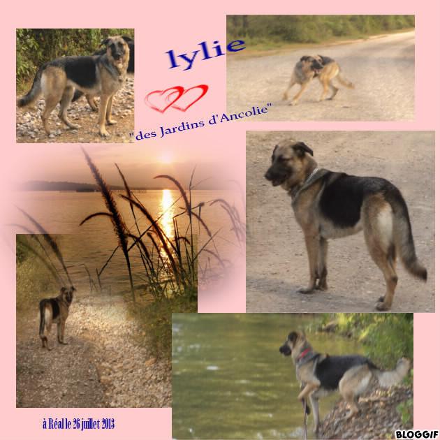 Jaqueline  (Lylie) croisée berger allemand -  SOS RECHERCE FA URGENT 34500 - Page 2 Bloggi11