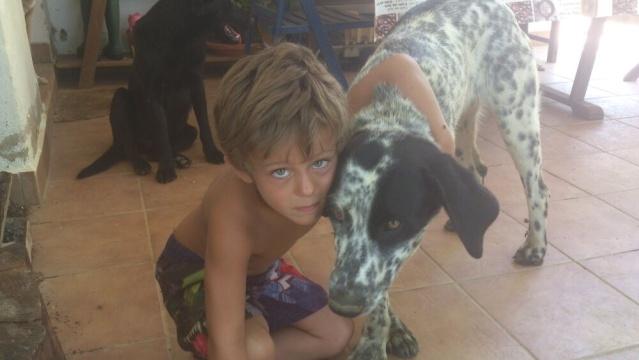ANGELA / ANGY jolie croisée bodeguera, blanche mouchetée noir, 2 ans Img-2013