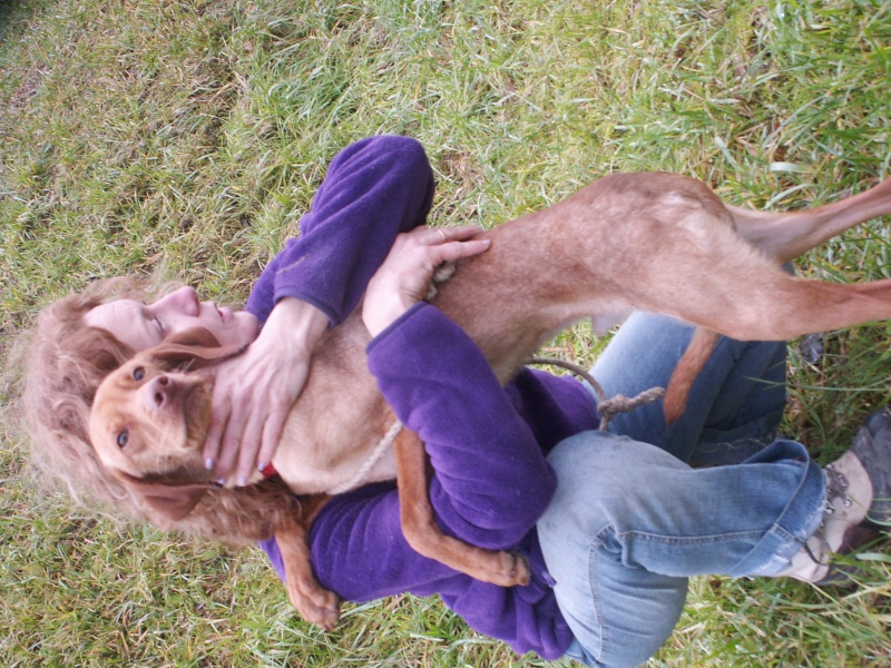 KOLA, type beagle mâle, 1 an 1/2, fourrière de Niort (79) Pict9536