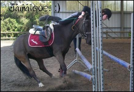 ♣ photos de vous à cheval Jama110