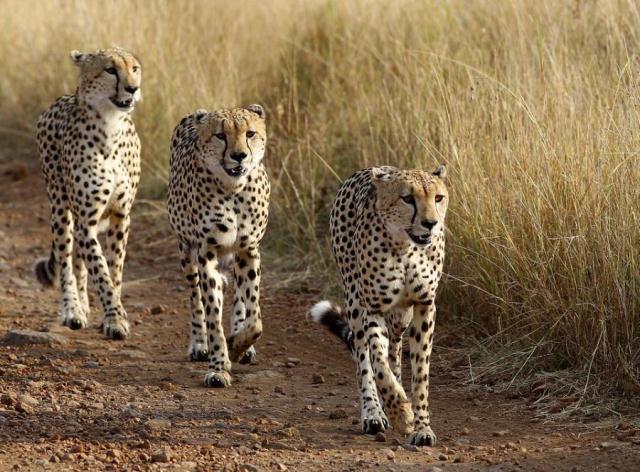 Shingo and her cubs Shingo10