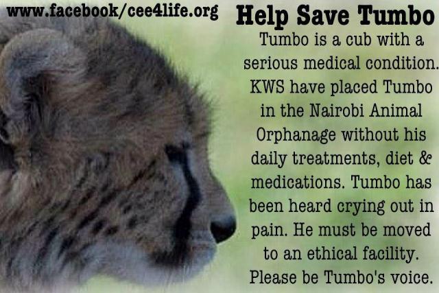 3 Cheetah Cubs - Page 4 Tumbo11