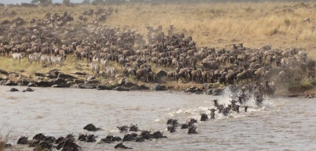 Great Migration Safari with Mike and Judy Rainy Wildie12