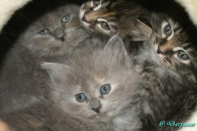 concours photos: le chat en groupe Dsc02610