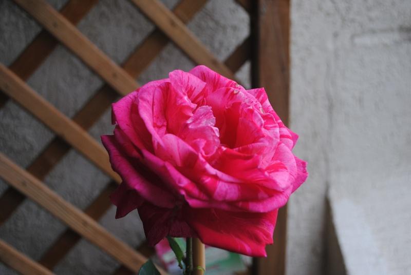 Joyeux anniversaire Thérèse Nikon_10