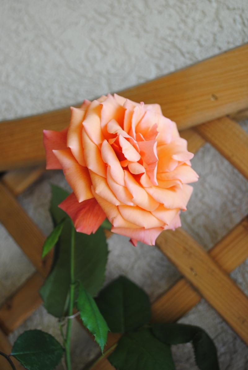 Joyeux anniversaire Thérèse Nikon_11