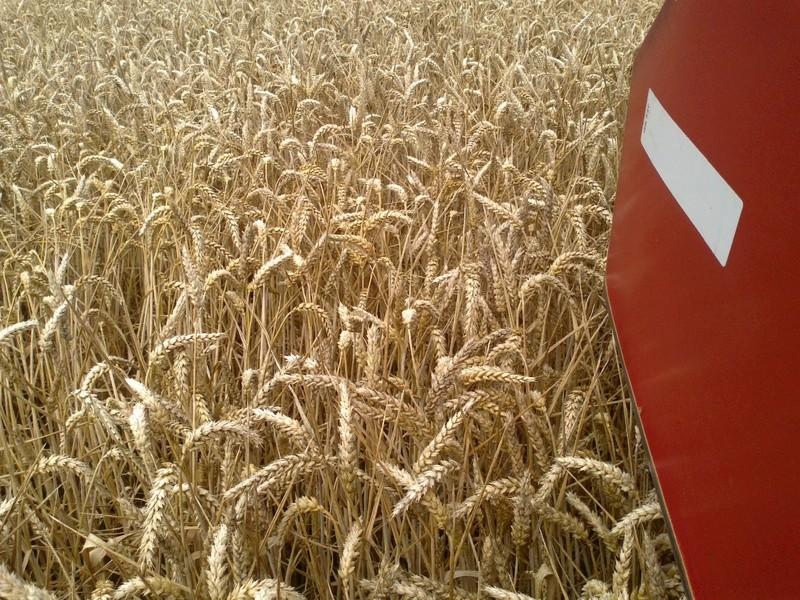 rendement 2016 en blé tendre - Page 2 30072012