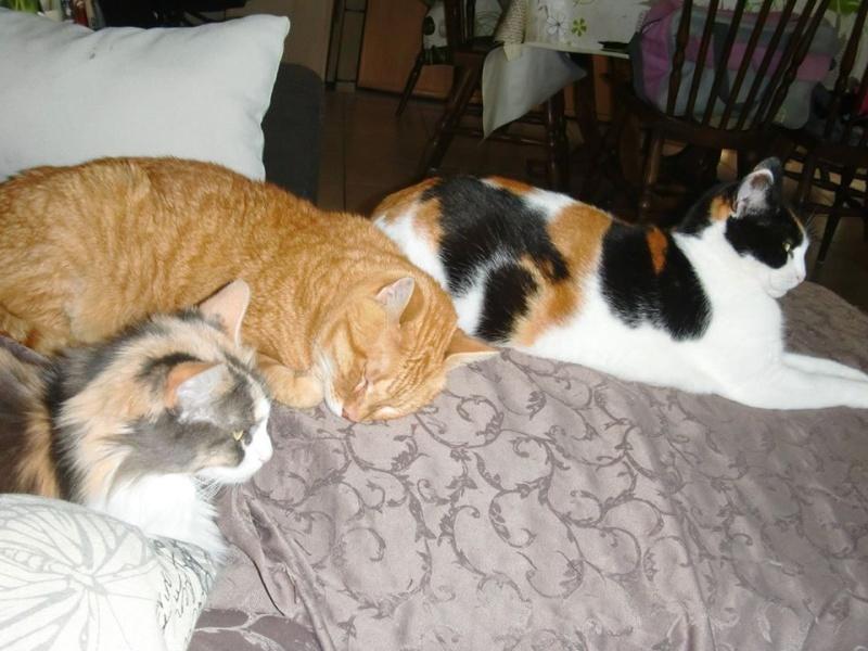Les chats, les chiens, et autres chouchoux.... - Page 9 10338710