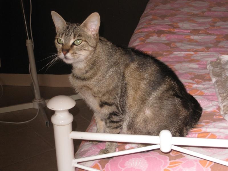 BENNIE - 6 ans - Femelle marbrée gris/marron Img_2916