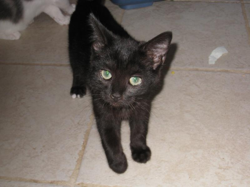 PRUNELLE - 6 mois - Femelle noir & plastron + bout des pattes blanc Img_2921