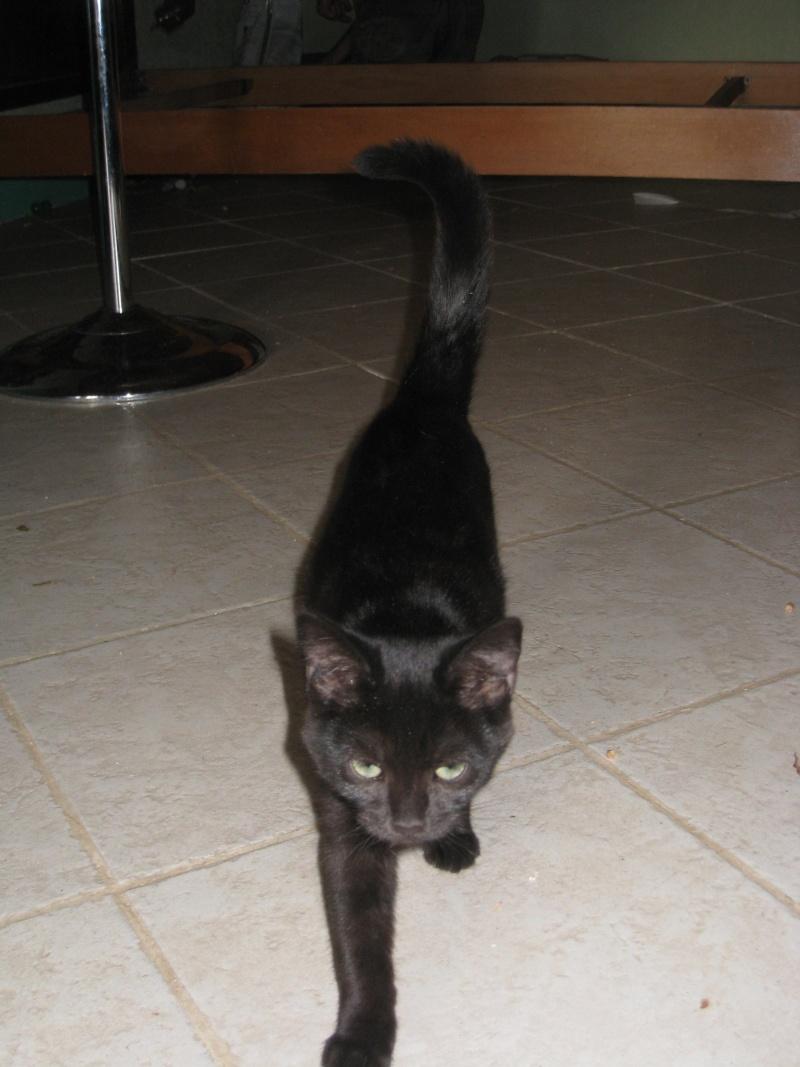PRUNELLE - 6 mois - Femelle noir & plastron + bout des pattes blanc Img_3118