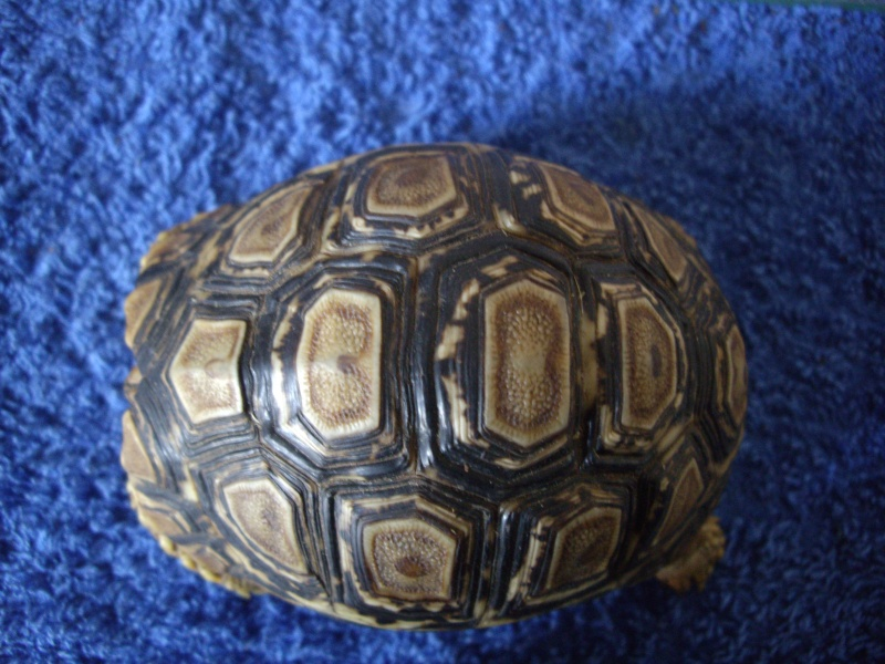 Identification de cette tortue Imgp4418