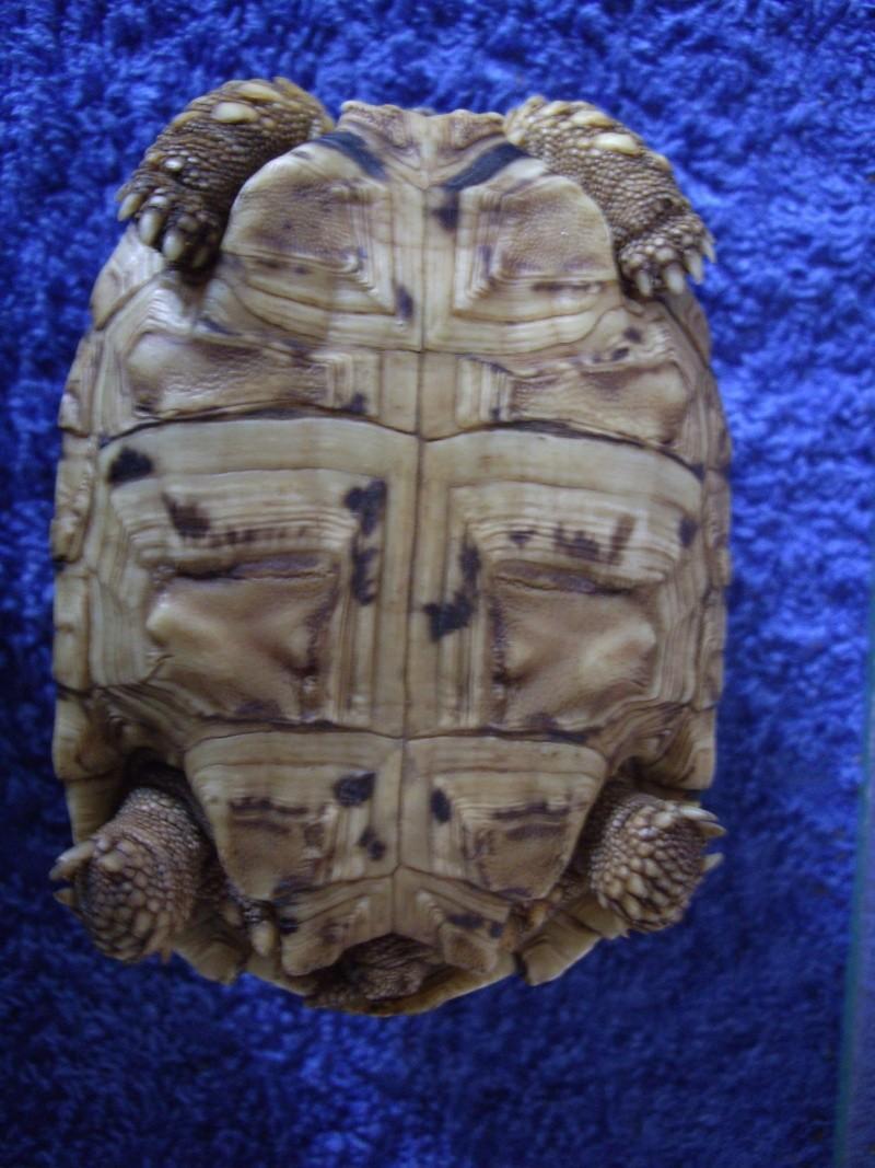 Identification de cette tortue Imgp4419