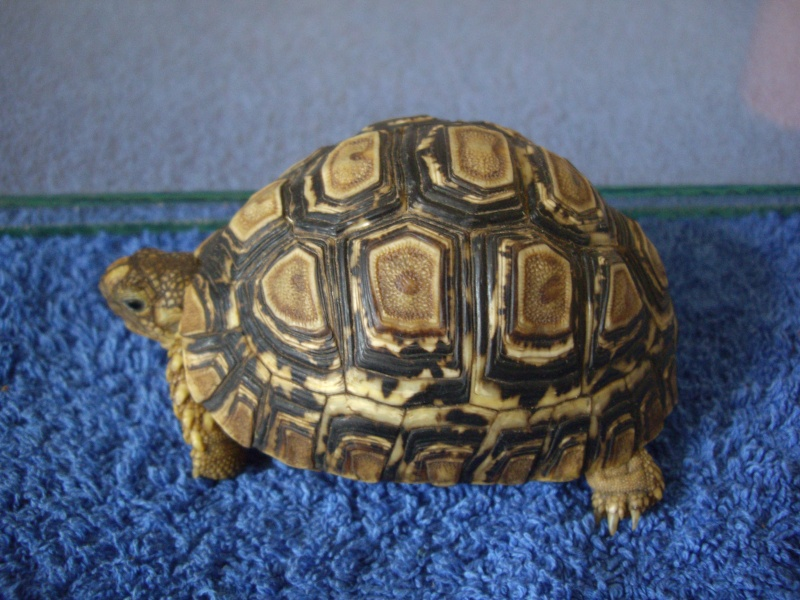 Identification de cette tortue Imgp4420