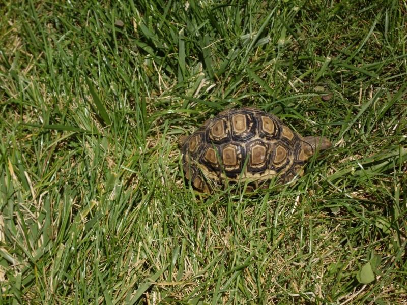 Identification de cette tortue Imgp4921