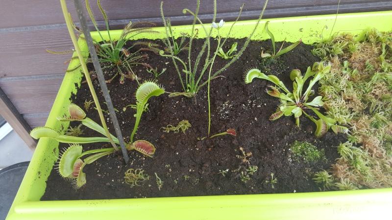 Jardiniere biodiversité 20160613