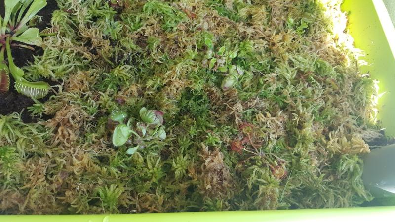 Jardiniere biodiversité 20160614
