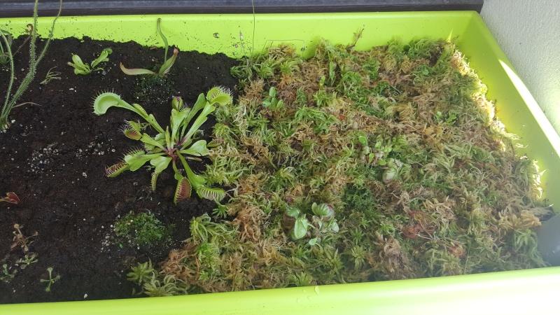 Jardiniere biodiversité 20160615