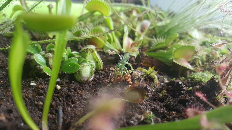 Jardiniere biodiversité 20160816