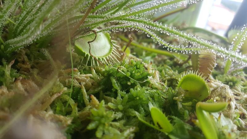Jardiniere biodiversité 20160818