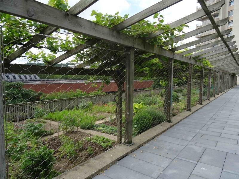 Jardins familiaux du Quartier du Pont de Sèvres Dsc09243