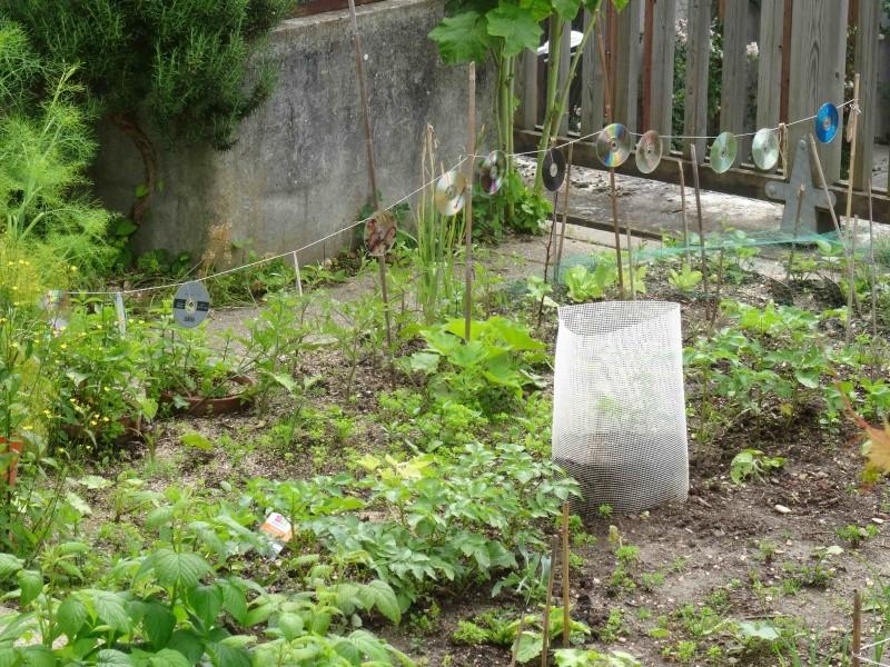Jardins familiaux du Quartier du Pont de Sèvres Dsc09244