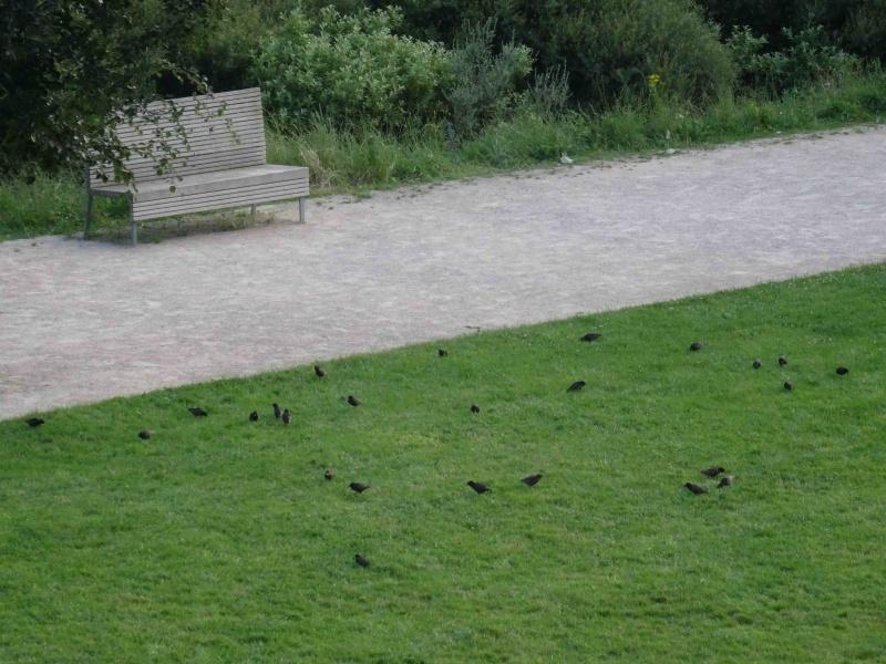 Ornithologie Dsc09515