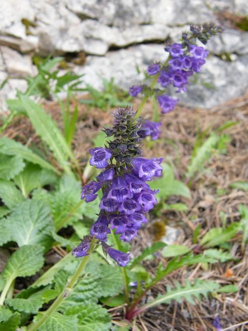 Une semaine dans le Parc naturel Fanes-Senes-Braies 10_her10
