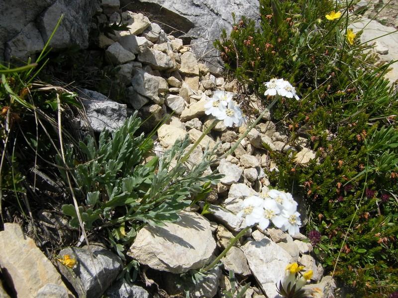 Du 13 au 19 juillet dans le Val di Fassa 11_ach10