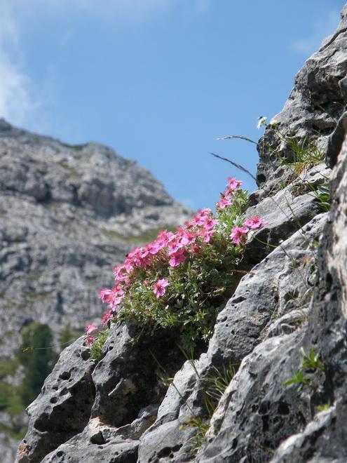 Les Dolomites d'Ampezzo et le Monte Pelmo 11_pot10