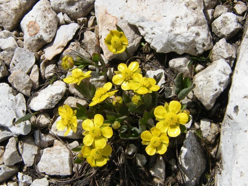 Les Dolomites d'Ampezzo et le Monte Pelmo 13_ran10