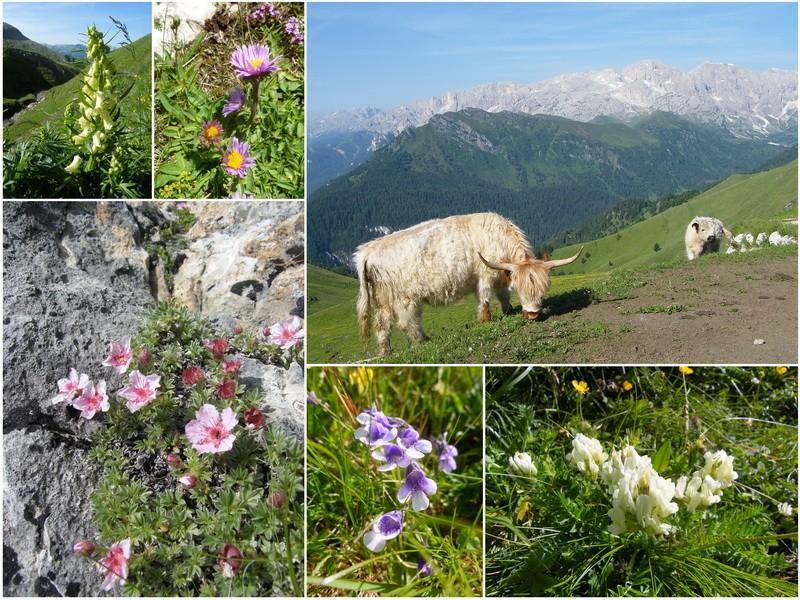 Du 13 au 19 juillet dans le Val di Fassa 16_rod10