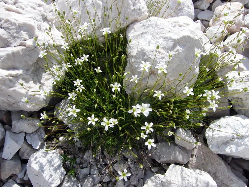 Les Dolomites d'Ampezzo et le Monte Pelmo 19_min10