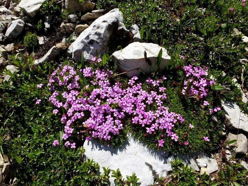 Dolomites Passo Falzarego Juillet 2016 19_sil10