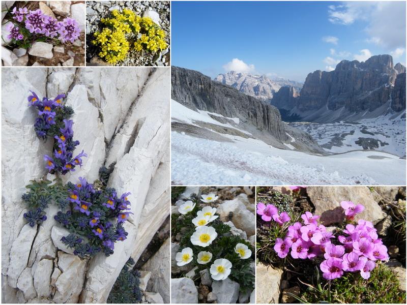 Les Dolomites d'Ampezzo et le Monte Pelmo 1_lagu10