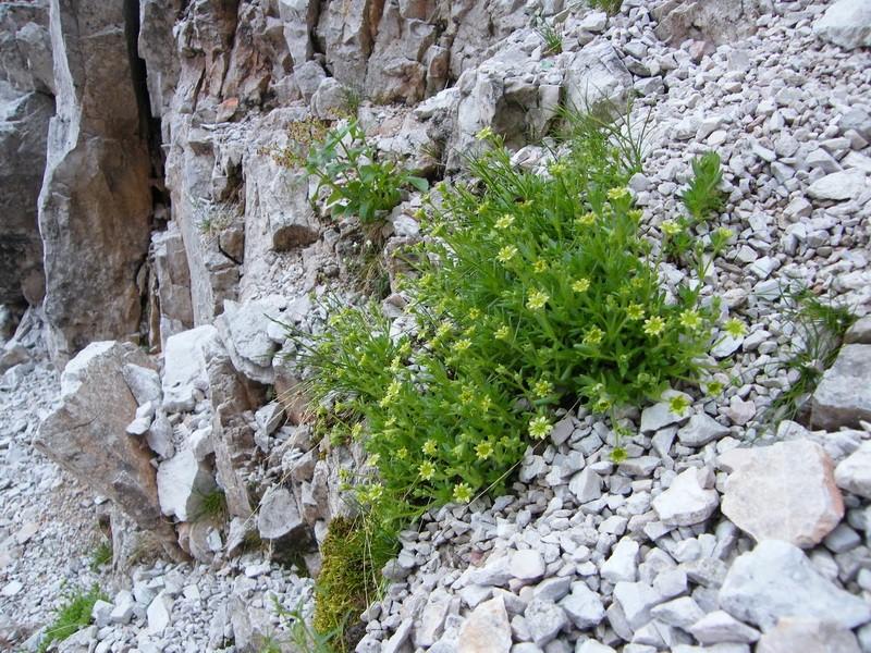 Les Dolomites d'Ampezzo et le Monte Pelmo 20_cin10