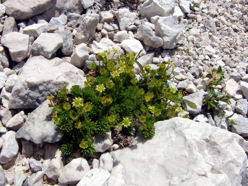 Les Dolomites d'Ampezzo et le Monte Pelmo 20_sax10