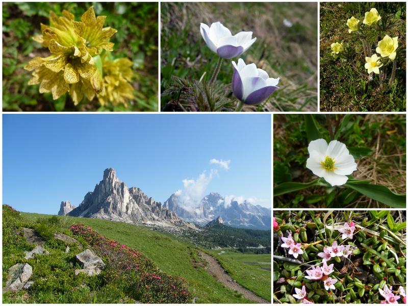 Les Dolomites d'Ampezzo et le Monte Pelmo 22_flo10