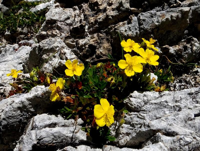 Dolomites Passo Falzarego Juillet 2016 22_hel10