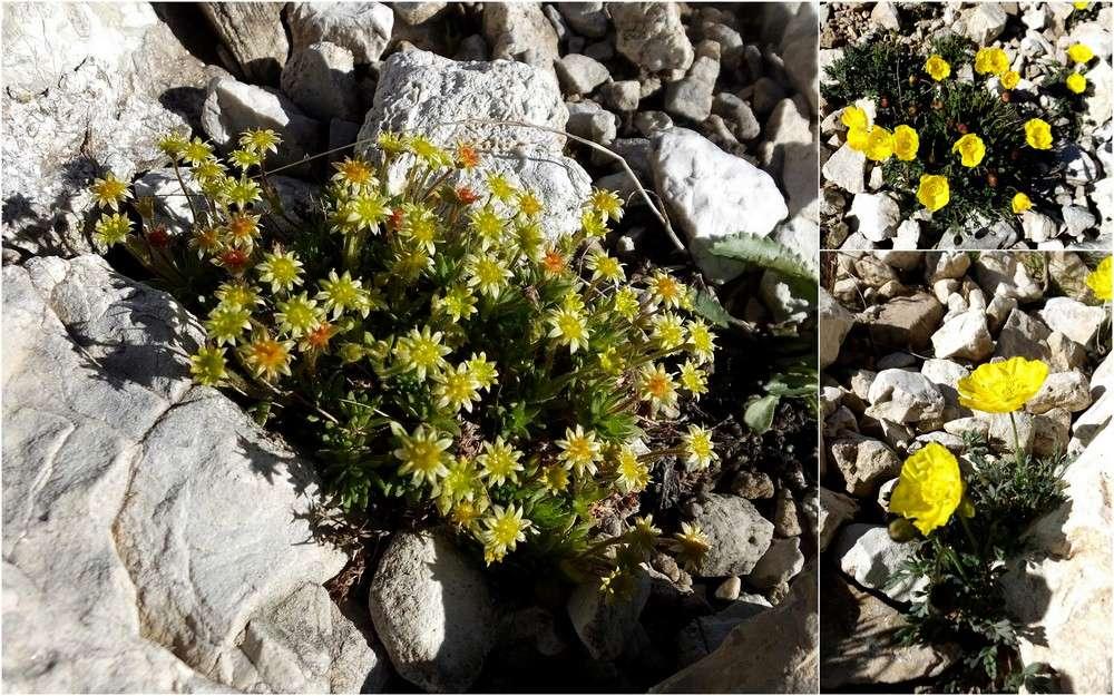 Dolomites Groupe du Sella - juillet 2016 24_sax11