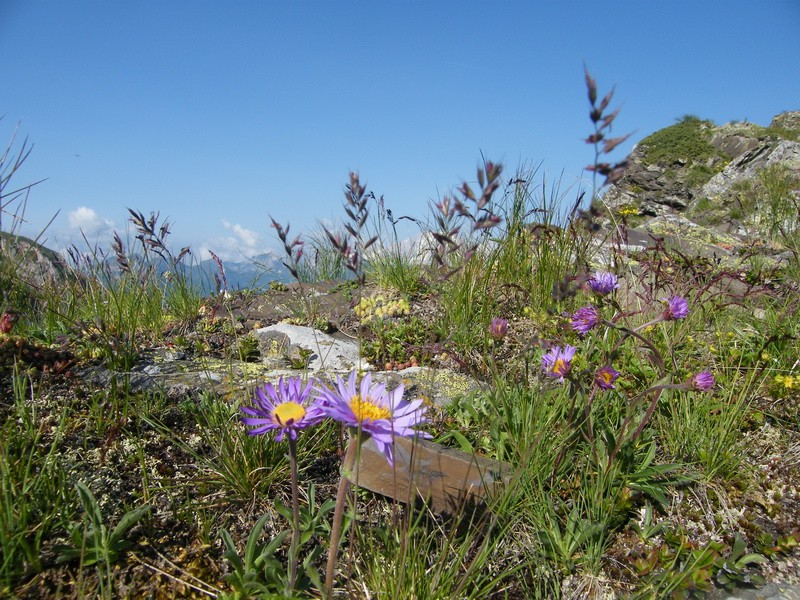 Les Dolomites d'Ampezzo et le Monte Pelmo 25_ast10