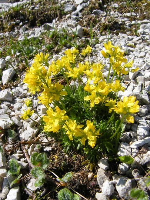 Les Dolomites d'Ampezzo et le Monte Pelmo 28_dra10