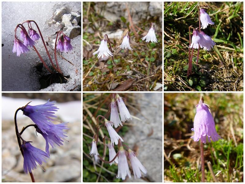 Les Dolomites d'Ampezzo et le Monte Pelmo 29_sol10