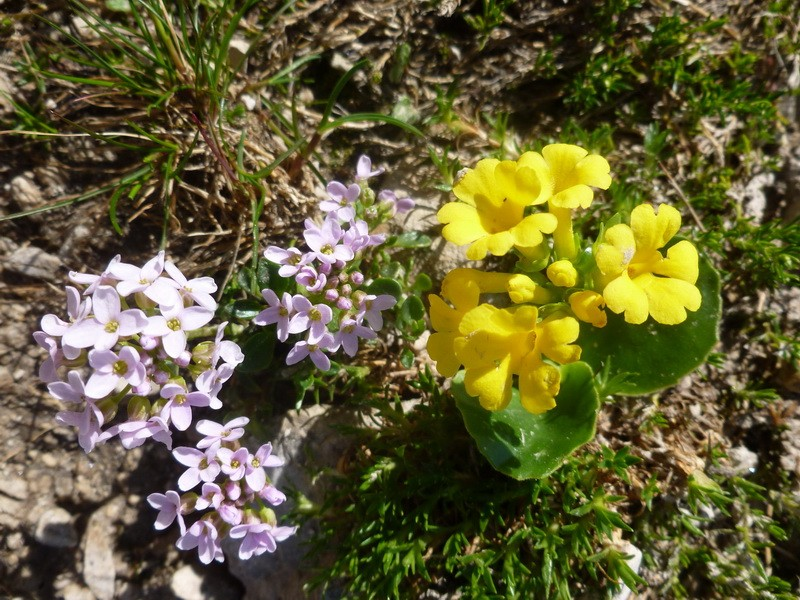 Les Dolomites d'Ampezzo et le Monte Pelmo 30_thl10